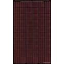 Pannello solari BISOL SPECTRUM BMU-250 rosso