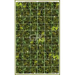 Pannello solari BISOL SPECTRUM BMU-250 verde